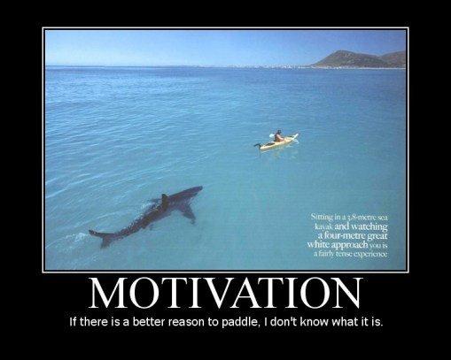 motivation-shark