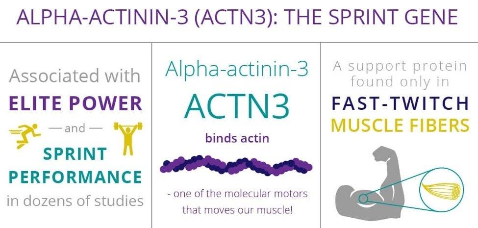 Top Sprinters Running Genetic Factor 6