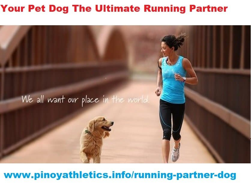 How pet dog is ultimate running partner 8
