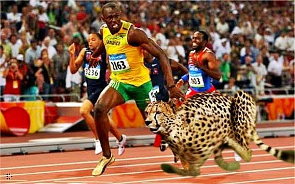 What is Usain Bolt Top Speed? 4